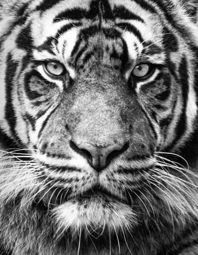 Animals-01