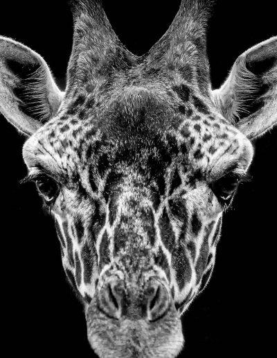 Animals-05