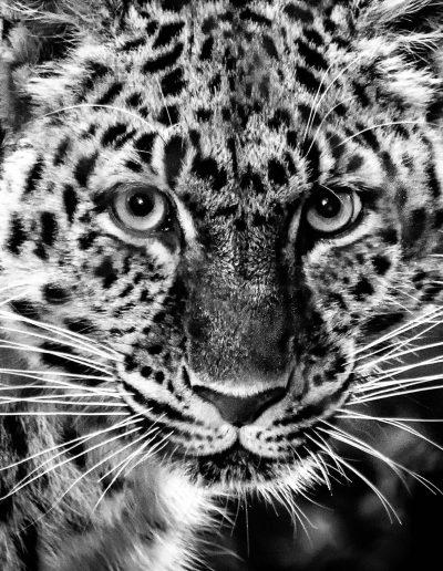 Animals-08